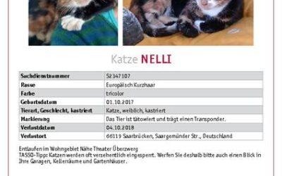 Nelli wird in Saarbrücken vermißt